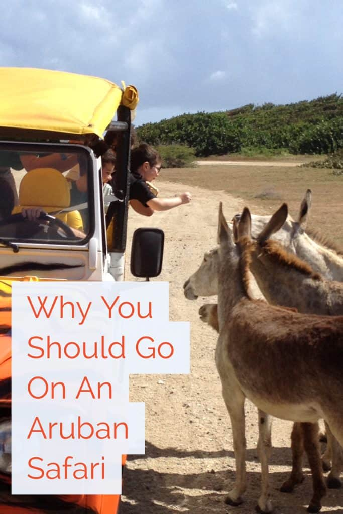 A jeep tour is a great way to tour the island of Aruba, particularly Arikok National Park. The jeeps can off-road, and you'll visit beaches, cliffs of crashing waves, an ostrich farm, wild donkeys, the lighthouse, and so much more! Why you should go on an Aruban safari...even if you hate tours. #aruba #jeeptour #caribbean