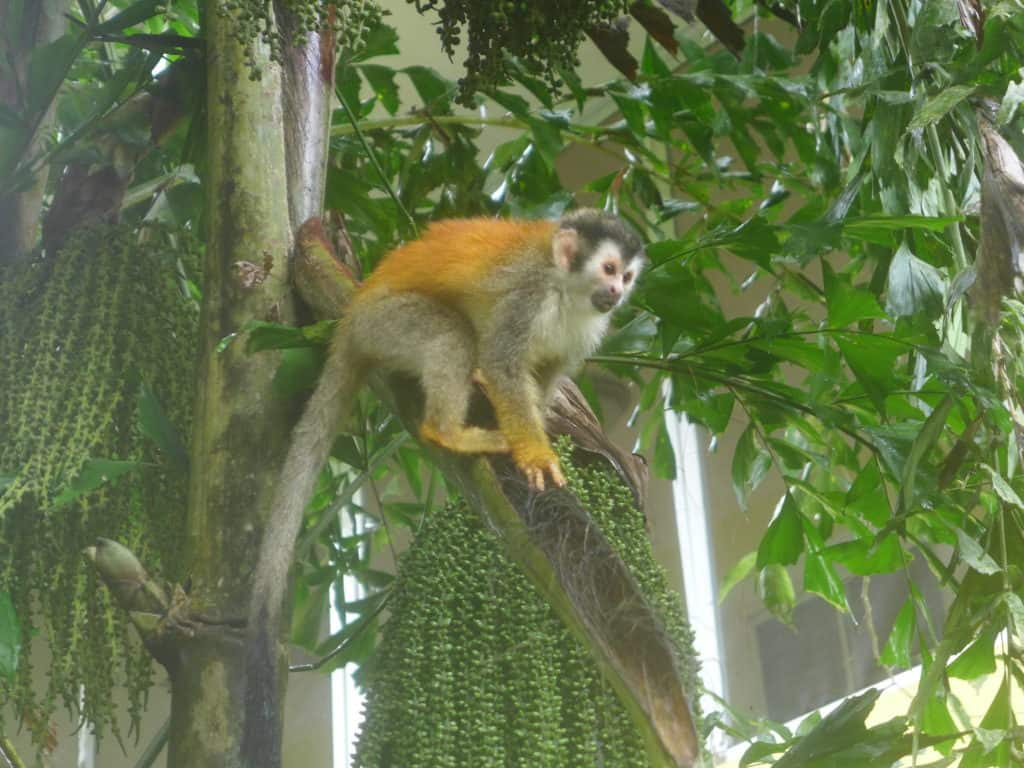 Our hotel was right outside the gates of Manuel Antonio National Park, with tons of wildlife at breakfast!