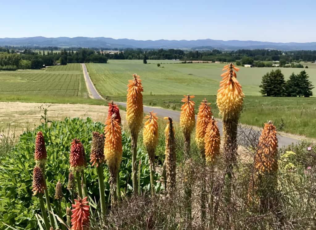 Leaving Ann Amie Vineyard, what to do in Willamette Valley | which wineries to visit, where to eat, how to plan your trip | Everything you need to know for a visit to the Willamette Valley, Portland itinerary, wine weekend in Oregon, the perfect girls' trip #willamette #wineries #oregon