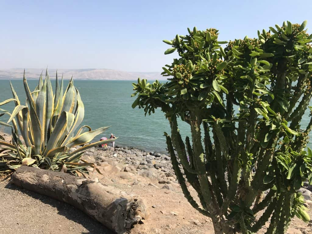 Sea of Galilee | A day trip from Tel Aviv to northern Israel, covering Caesarea, Tel-Megiddo, the Sea of Galilee, Capernaum, the Mount of Beatitudes, Tiberias, and Akko | what to do in Israel | There's so much to visit in such a small area, you can have a jam-packed day driving from Tel Aviv or Jerusalem but cover so many historic sites and towns | Israel itinerary ideas, Christian history trips, visit the Jesus trail, bible archaeology tours, what to see in Israel, Jerusalem day trips #israel #seaofgalilee #telaviv
