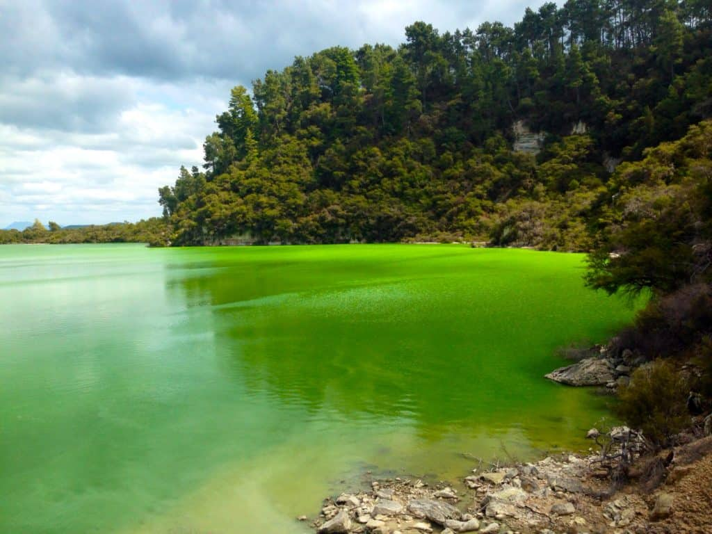 Wai-O-Tapu's thermal springs are just one of the must-sees in the Rotorua area