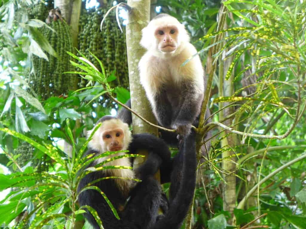 Monkeys at breakfast and so much more...everything you need to know for your Manuel Antonio, Costa Rica trip!