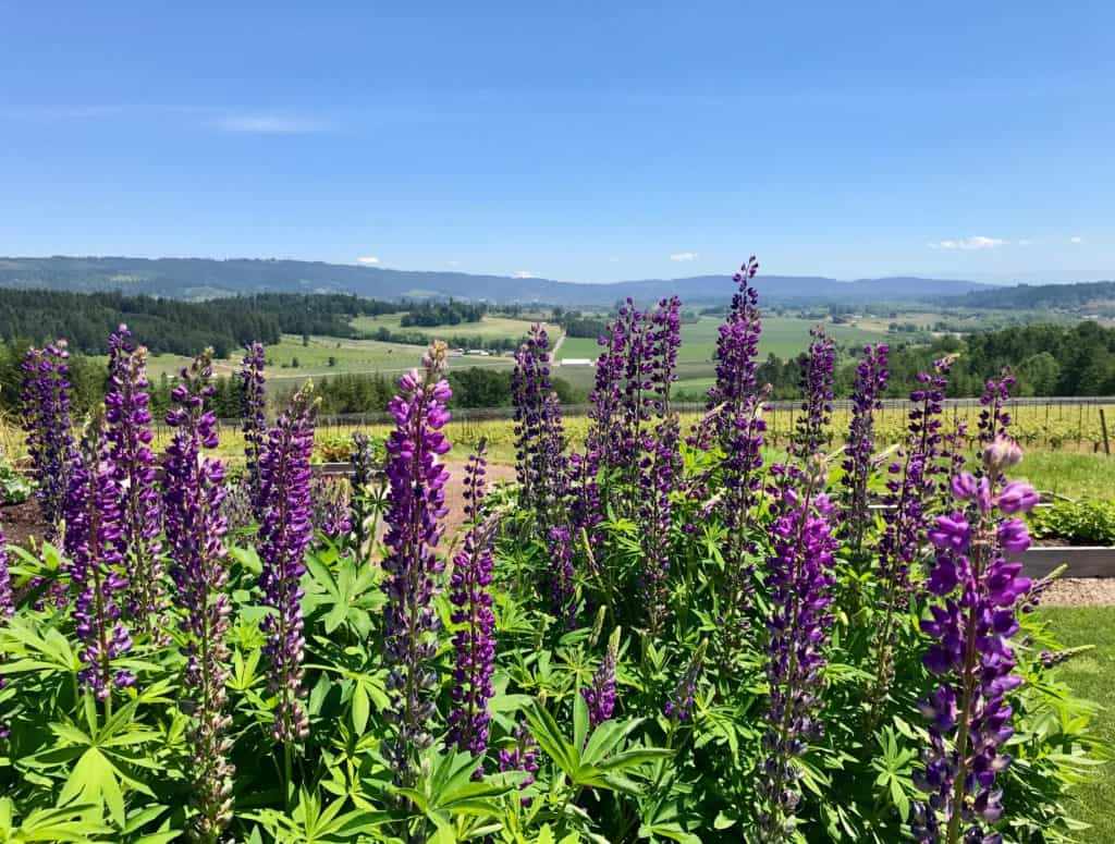 A perfect 3-day Willamette Valley & Portland itinerary...hiking, waterfalls, food, breweries, wineries, and more! What to do in Portland, Willamette Valley wineries to visit, best waterfall hikes in Oregon, and how to plan your trip!