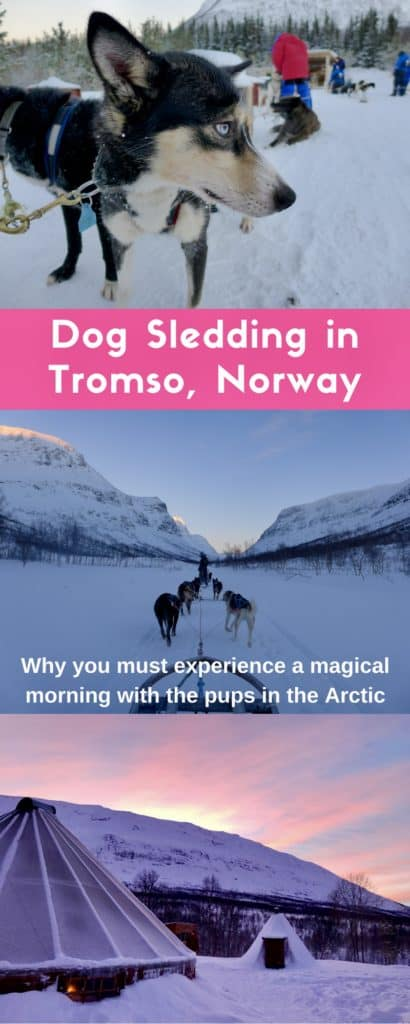 How to go dog sledding in Tromso, and why it's a must! How to plan your trip, what to do in Tromso, what to do in Norway | Tromso is 200 miles north of the Arctic Circle & perfect to visit for the Northern Lights and more! Dog sledding Tromso in an epic trip #dogsledding #tromso #norway