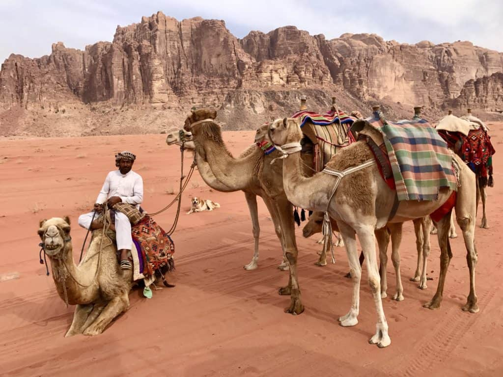 Camel rides with the guides in Wadi Rum