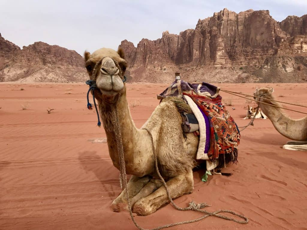 A day in Wadi Rum is a must with one week in Israel and Jordan
