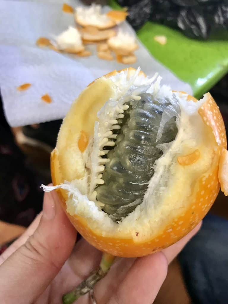 Taking a Medellin Exotic Fruit Tour | A morning on Real City Tours' exotic fruit tour in Minorista Market is a must if you're visiting Medellin! Learn about the market's history and taste more than a dozen fruits!