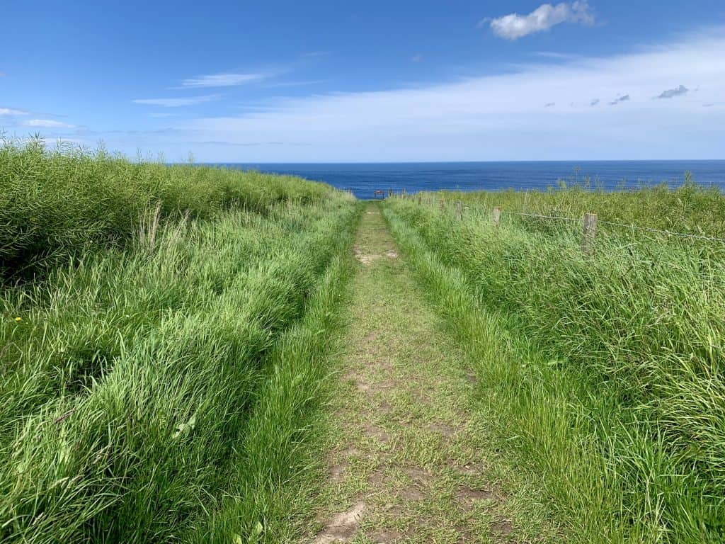 Beautiful path to the sea and Findlater Castle ruins