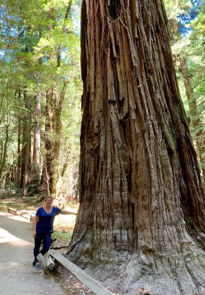 Hiking in Sonoma will make you feel tiny among the redwoods of Armstrong Woods