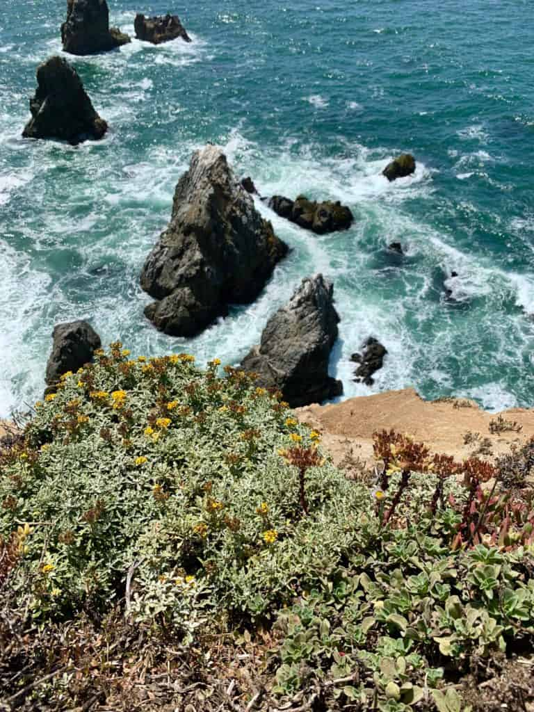 Hiking California's Gorgeous Bodega Head Trail (Sonoma Coast) | This easy and accessible hike on northern California's Sonoma Coast is a must-do if you're visiting the area | One Girl, Whole World