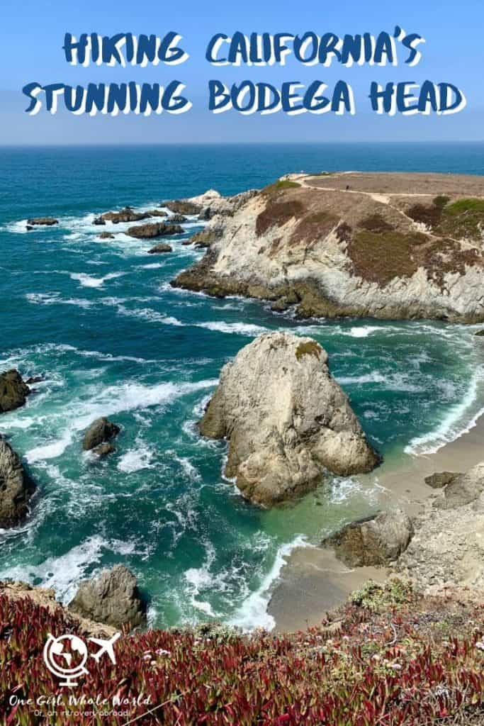 Hiking California's Gorgeous Bodega Head Trail (Sonoma Coast) | This easy and accessible hike on northern California's Sonoma Coast is a must-do if you're visiting the area. What to expect from Bodega Head Trail, where to hike in Sonoma County, best California coast hikes, and more! #sonomacoast #hiking #california