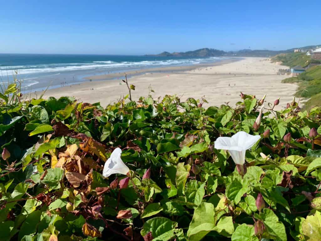 Pretty Nye Beach in Newport - a must on an Oregon coast road trip itinerary