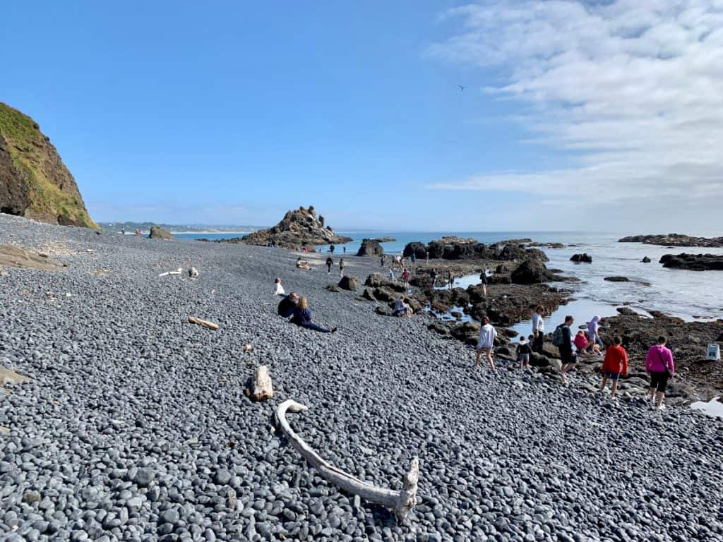 Go see the wildlife at Yaquina Head Lighthouse - what to see on the Oregon coast