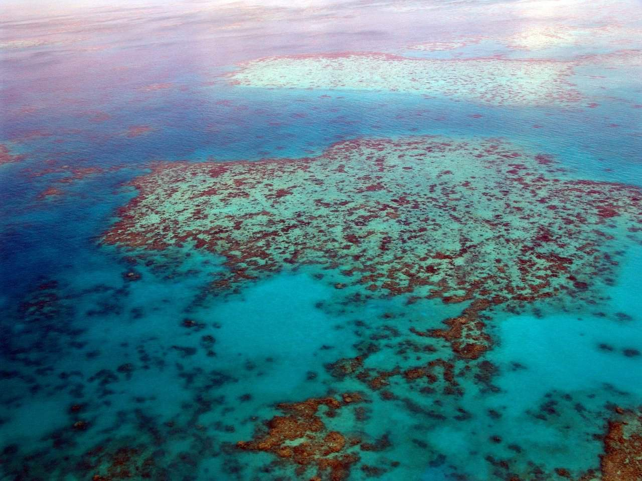 Scuba diving in the Great Barrier Reef has been on my travel bucket list since I was a teenager