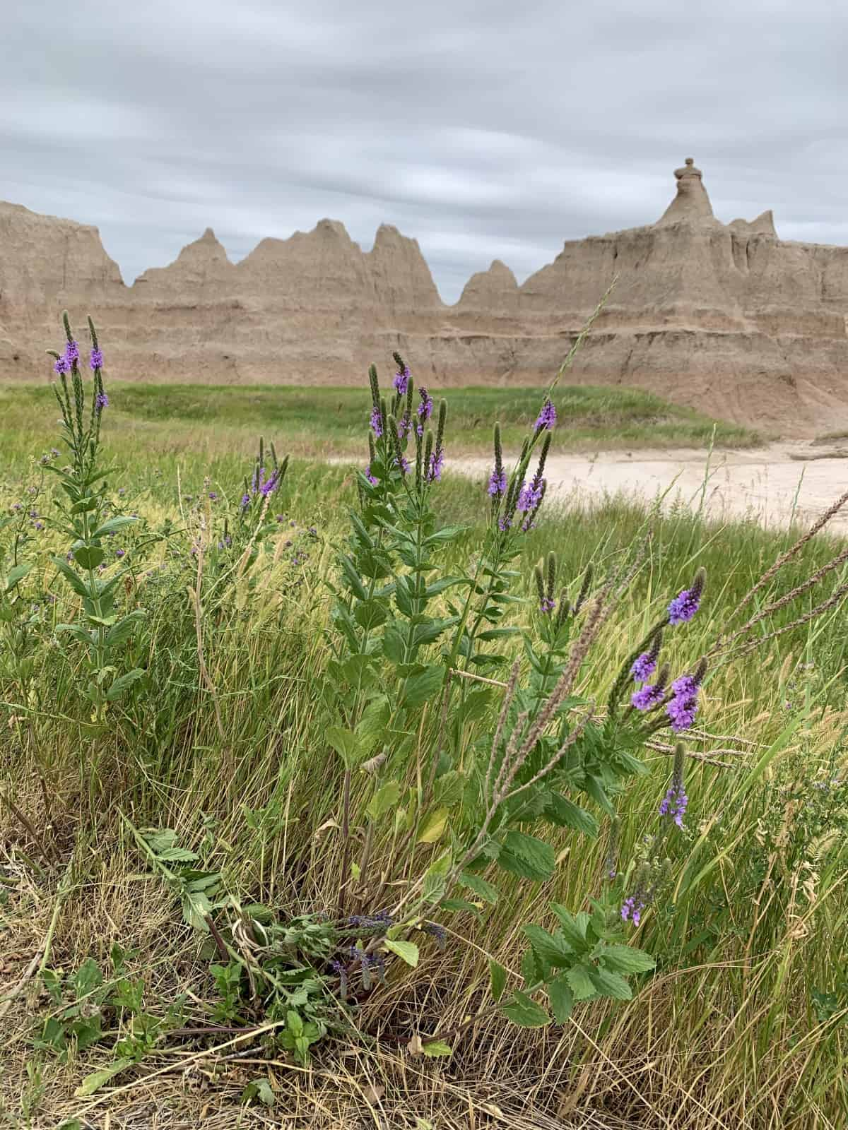 Planning a Trip to Badlands National Park | From fossils to wildlife to prairie wildflowers to amazing rock formations, a roadtrip to South Dakota's Badlands is a must, and an easy day trip from Rapid City. What route to take, costs, things to do in Badlands, where to stop, and many more tips (including a stop at Wall Drug!). South Dakota roadtrip ideas, visiting national parks, social distance roadtrip ideas.