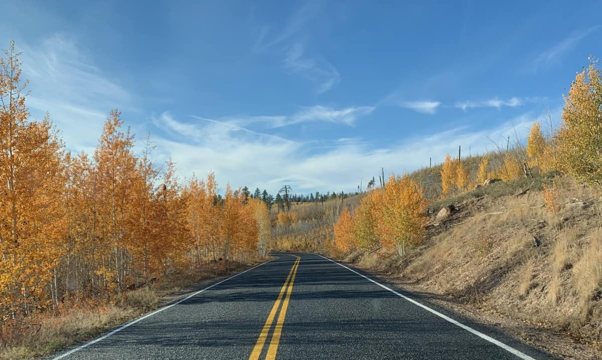 Beautiful fall aspens around the North Rim Grand Canyon
