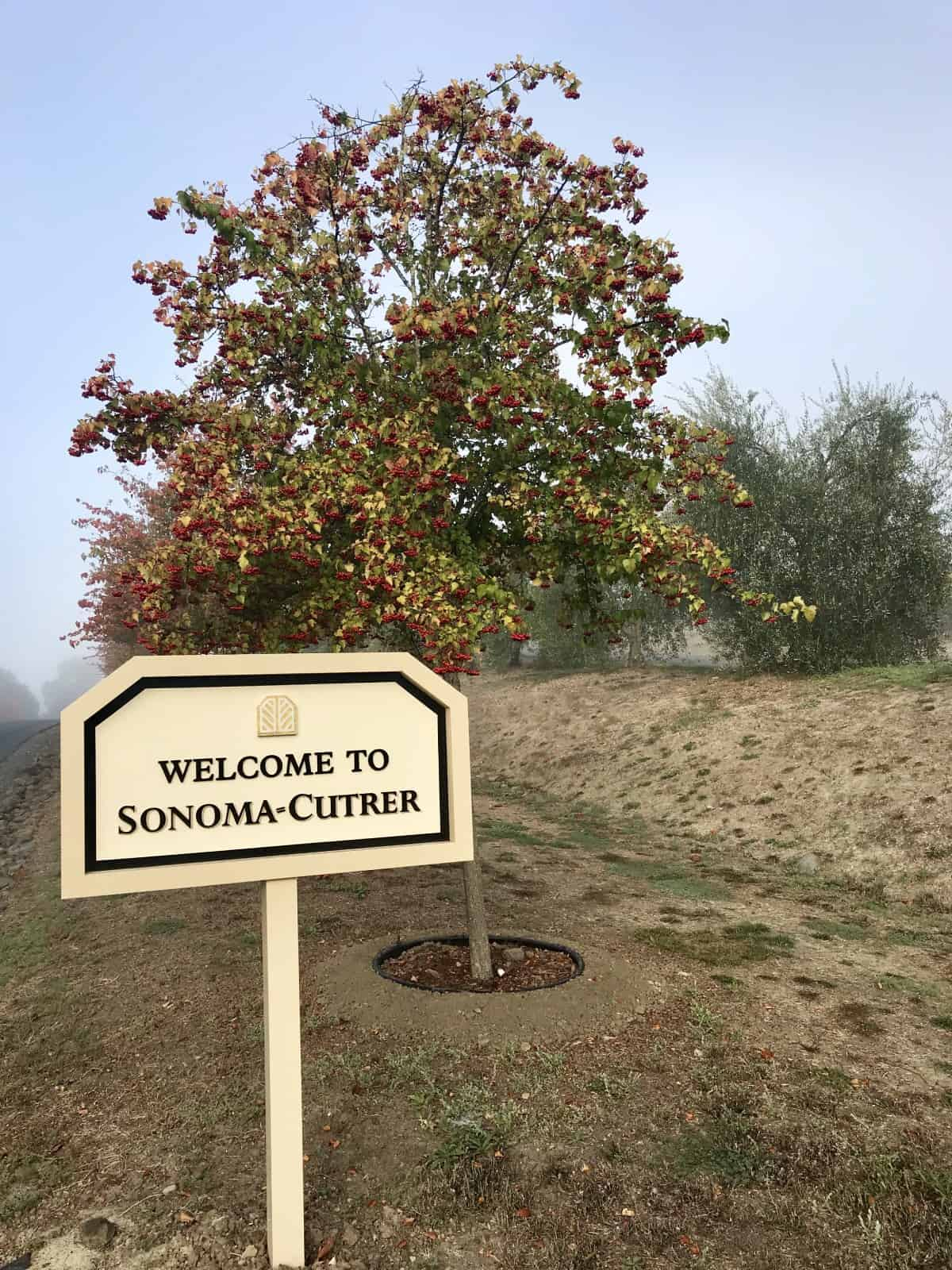 A foggy morning welcome to Sonoma-Cutrer