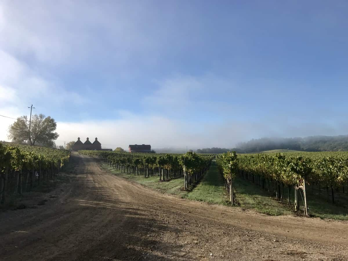 A beautiful foggy morning touring the vineyards of Sonoma-Cutrer