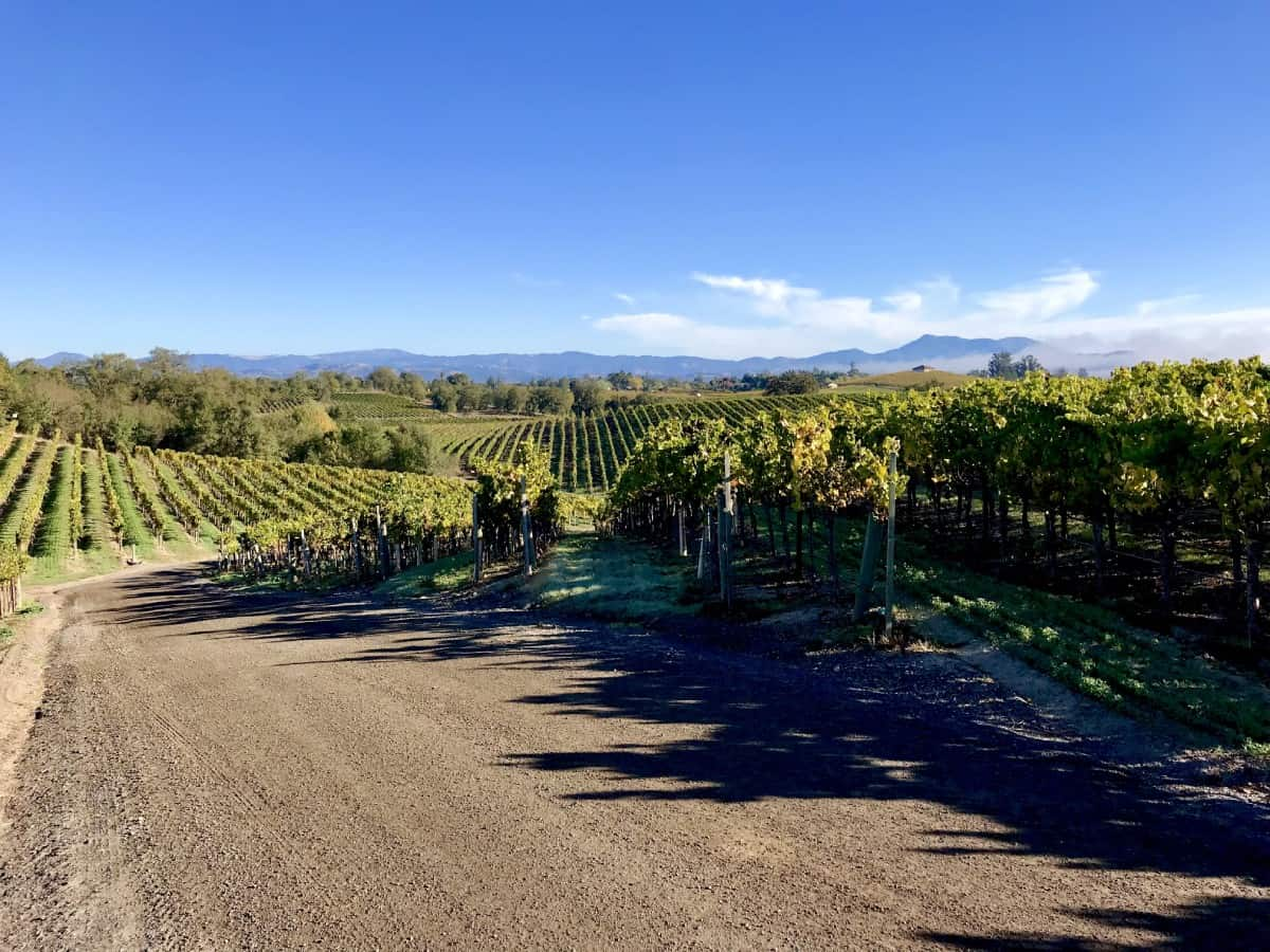 The vineyards at Sonoma-Cutrer