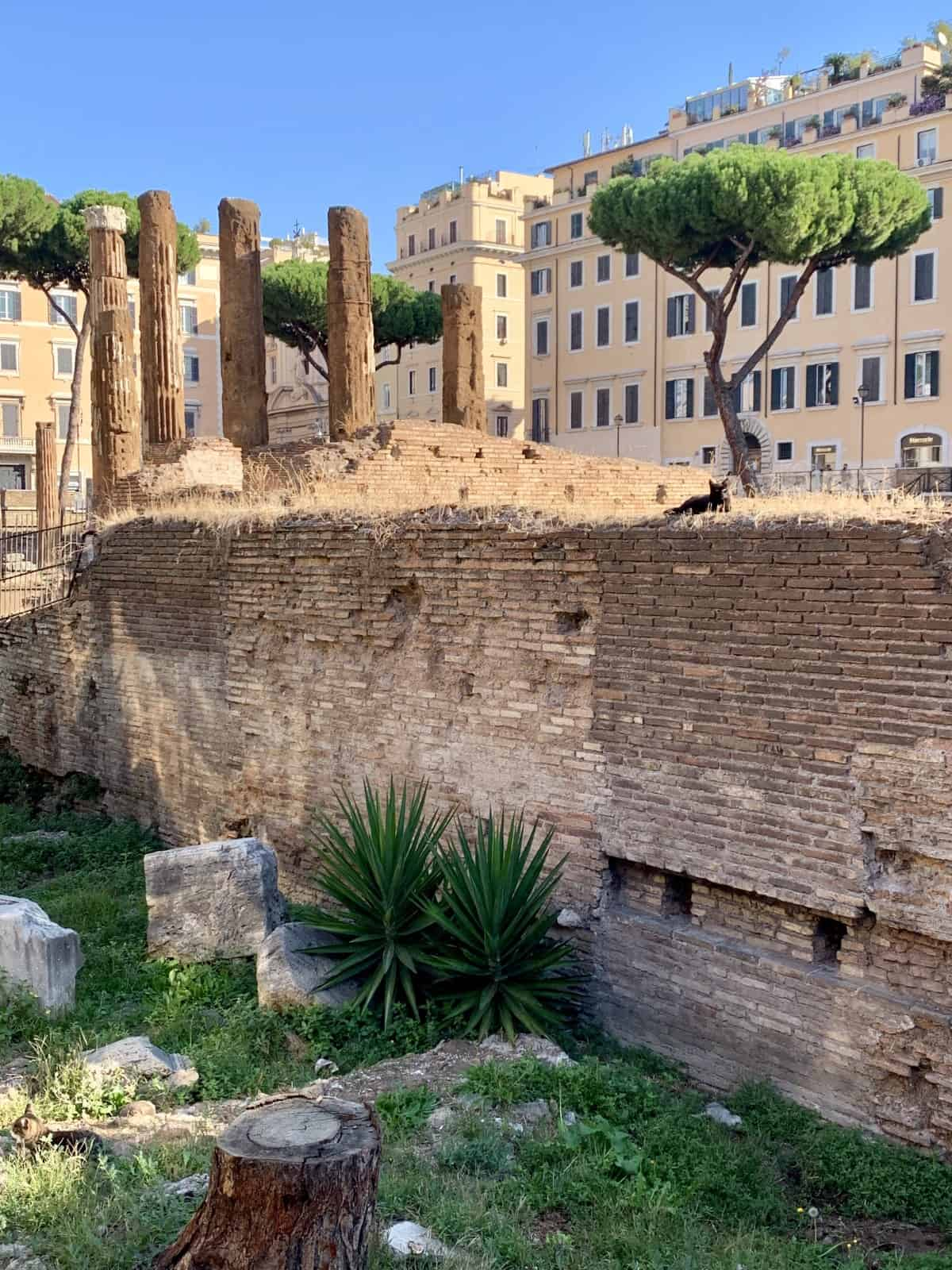 Largo di Argentina...come see the kitties and ruins - what to do in Rome
