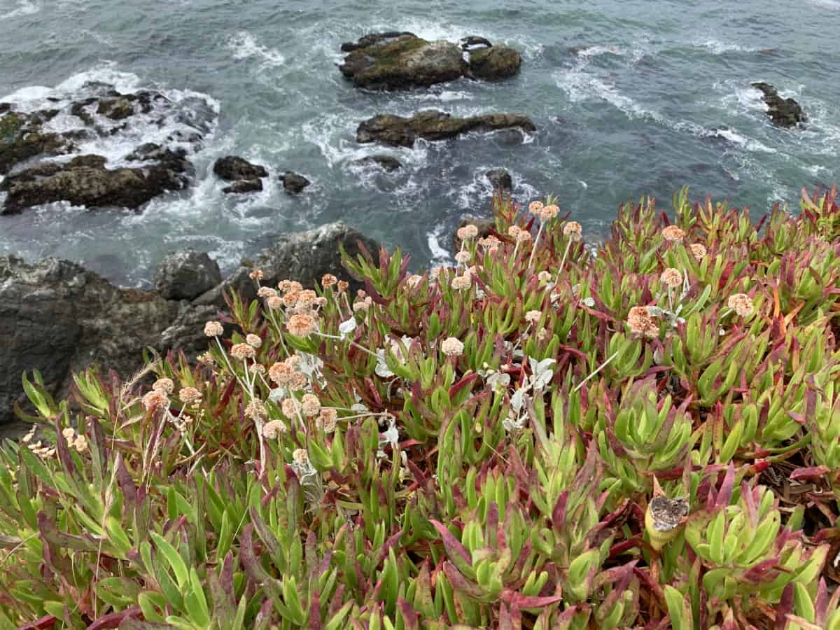 Stopping along the coast is a must...things to do on the Sonoma Coast, California